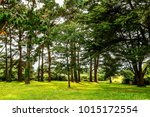 beautiful in forest. green... | Shutterstock . vector #1015172554