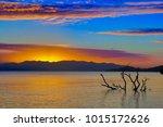 submerged tree in still surf at ... | Shutterstock . vector #1015172626