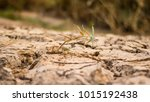Small photo of grass is coming out of dry soil