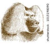 vector antique engraving... | Shutterstock .eps vector #1015198090