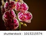 orchid   flower head | Shutterstock . vector #1015215574