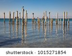 Pelicans Resting On Old Pier...