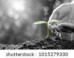 men's hands are watered with... | Shutterstock . vector #1015279330