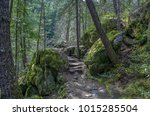 rock lined trail through the...   Shutterstock . vector #1015285504