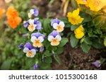 flowers at light leak . image... | Shutterstock . vector #1015300168