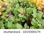 flowers at light leak . image... | Shutterstock . vector #1015300174
