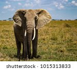Suspicious Elephant While Bein...