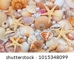 starfishes  pearls  and amazing ... | Shutterstock . vector #1015348099