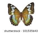 Stock photo green butterfly euthalia byakko isolated on white background 101535643
