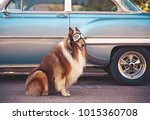 a collie posing for the camera... | Shutterstock . vector #1015360708