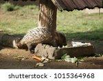 portrait of cute porcupine. the ... | Shutterstock . vector #1015364968