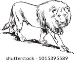 Lion. Vector Isolated Animal