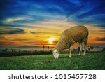 sheep in field at sunset | Shutterstock . vector #1015457728