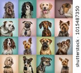 composition of dogs against... | Shutterstock . vector #1015487350