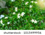 blur background and bokeh light ... | Shutterstock . vector #1015499956