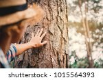 man touching big tree color of... | Shutterstock . vector #1015564393