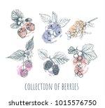 berries set. collection of...   Shutterstock . vector #1015576750