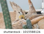 the lizard sits and looks at us ... | Shutterstock . vector #1015588126