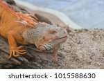 the lizard sits and looks at us ... | Shutterstock . vector #1015588630