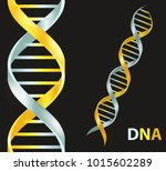 gold and silver dna icon. dna... | Shutterstock . vector #1015602289