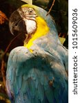 blue and yellow parrot...   Shutterstock . vector #1015609036