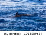dolphins at black river ... | Shutterstock . vector #1015609684