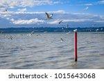 Small photo of Seagull on red stake, Rotorua lake landscape, New Zealand