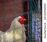 portrait of a rooster. white... | Shutterstock . vector #1015696000