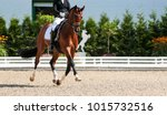 dressage horse in the test ... | Shutterstock . vector #1015732516