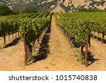 napa valley california vineyard ... | Shutterstock . vector #1015740838