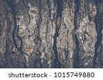 wood tree bark background with... | Shutterstock . vector #1015749880