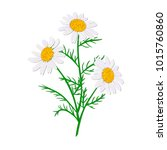 daisy or chamomile. wildflower... | Shutterstock .eps vector #1015760860