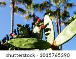different european cactus | Shutterstock . vector #1015765390