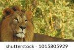 strong looking wild east... | Shutterstock . vector #1015805929