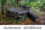 Old Jaguar In The Woods