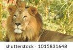lion looking regal standing ... | Shutterstock . vector #1015831648