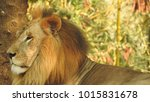 lion looking regal standing ... | Shutterstock . vector #1015831678