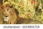 lion looking regal standing ... | Shutterstock . vector #1015831714