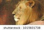 lion looking regal standing ... | Shutterstock . vector #1015831738