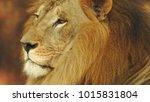 lion looking regal standing ... | Shutterstock . vector #1015831804