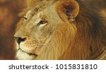 lion looking regal standing ... | Shutterstock . vector #1015831810