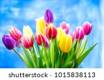 Colorful Tulip Flowers On A...