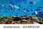 fish swim in the red sea | Shutterstock . vector #1015853134