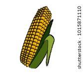 fresh corn isolated | Shutterstock .eps vector #1015871110
