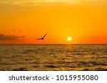 Beautiful Pelican Flying At...