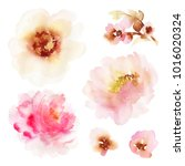 a set of watercolor elements... | Shutterstock . vector #1016020324