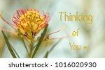 condolence card for a  sad...   Shutterstock . vector #1016020930