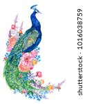 Stock photo big bird and peacock flowers watercolor hand painting 1016038759