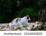 Portrait Of 3 Color Cat Lookin...