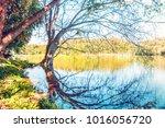 shot of beautiful tree... | Shutterstock . vector #1016056720